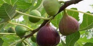 buahtin